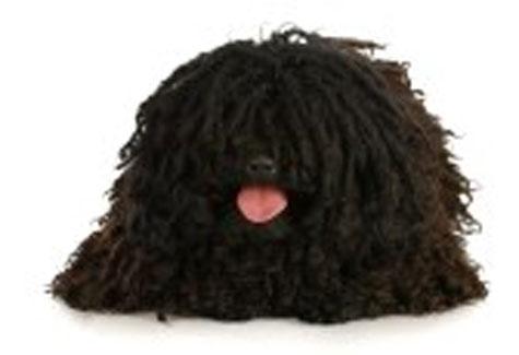 Chó chăn cừu Hung