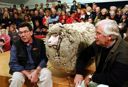 New Zealand tưởng niệm chú cừu ngôi sao