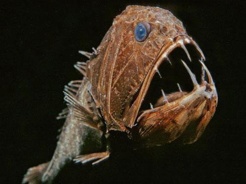 """Ấn tượng mạnh với những """"quái vật"""" trong lòng biển"""