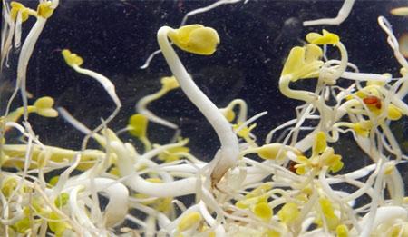 Hà Nội giám sát dịch E.coli tại sân bay