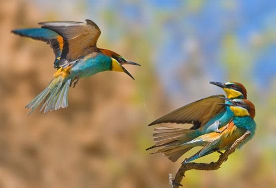 Sự tức giận của một chú chim khi bắt gặp bạn đi với người khác