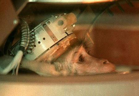Chú khỉ trong ảnh tham gia một thử nghiệm vệ tinh nhân tạo của Nga vào năm 1997