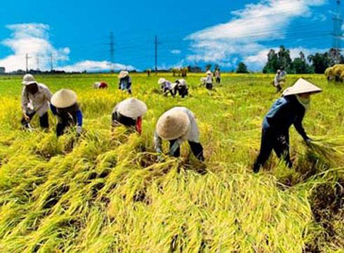 Việt Nam tham gia dự án lúa gạo quốc tế