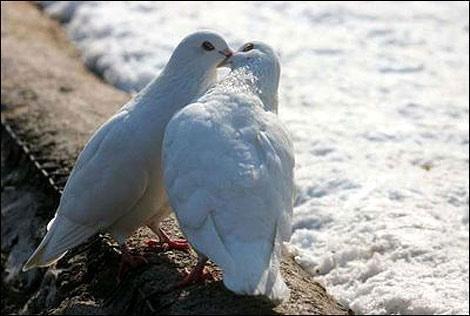 Con người không phải là loài duy nhất có những cử chỉ giống như hôn, động vật cũng biết yêu thương.