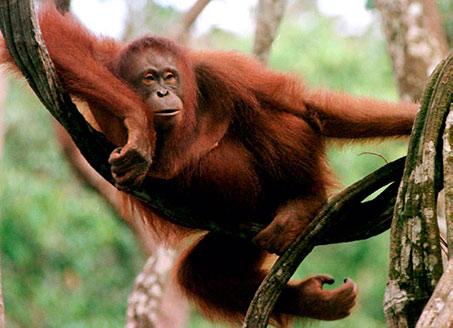 Nhiều loài động vật hoang dã đang đứng trước nguy cơ tuyệt chủng do tình trạng săn bắn, buôn bán của con người.