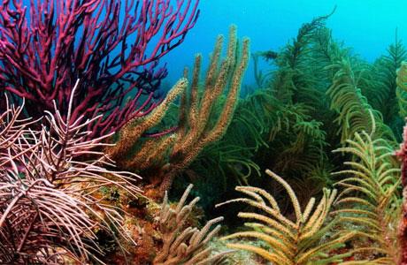 Đại dương bị đe dọa