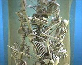 Khai quật 17 bộ xương trẻ em Do thái