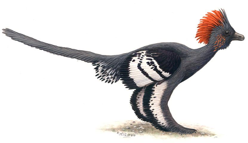 Anchiornis Huxleyi - loài khủng long có họ hàng rất gần với loài chim.
