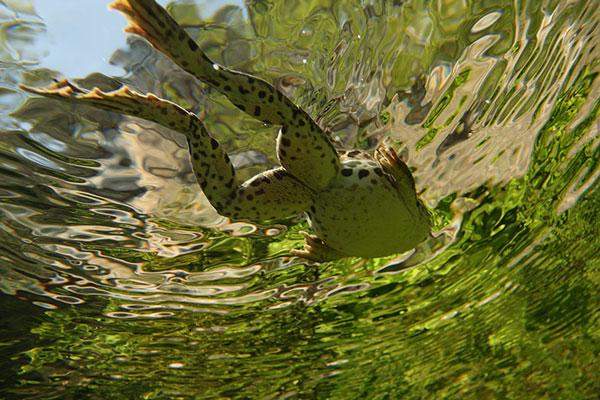 Bức ảnh đoạt giải trong cuộc thi ảnh trực tuyến Wild Wonders of Europe.