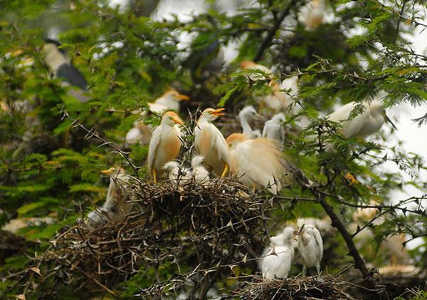 Tổ chim ở khu bảo tồn thiên nhiên La Barra tại Metapan (El Salvador).