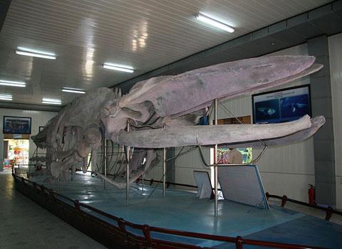 Viện Hải dương học - nơi lưu giữ và bảo tồn bộ mẫu sinh vật biển lớn nhất Việt Nam. Viện này ở tỉnh Khánh Hòa, thành lập 1932, hiện lưu giữ và bảo tồn một bộ mẫu sinh vật biển lớn và quý, khoảng 20.000 mẫu của 5.000 loài thuộc các nhóm thực vật biển, hải miên, ruột khoang, thân mềm, giáp xác, giun nhiều tơ, da gai, sinh vật phù du, cá, bò sát, thú biển. Bộ mẫu sinh vật biển bao gồm các loài hiện hữu ở Việt Nam và các vùng lân cận, kể cả một số mẫu cá nước ngọt ở Lào và Campuchia, có giá trị lớn phục vụ nghiên cứu về phân loại học, đa dạng sinh học biển và môi trường biển.