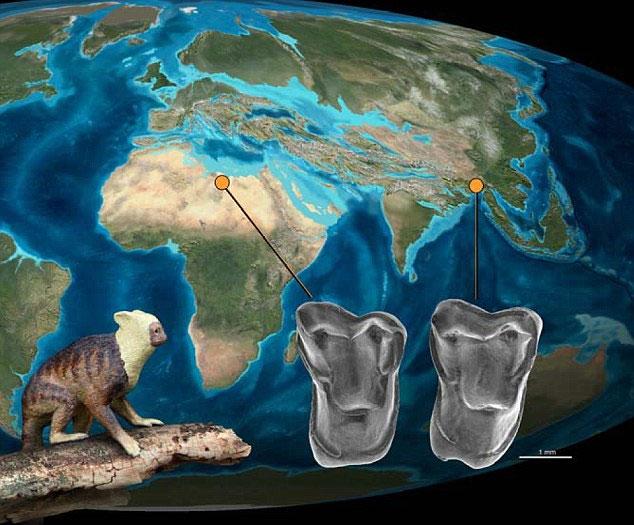 Khả năng loài Afrasia djijidae - tổ tiên loài người đã di cư từ châu Á sang châu Phi