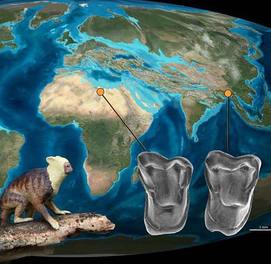 Loài người có gốc gác từ châu Á?