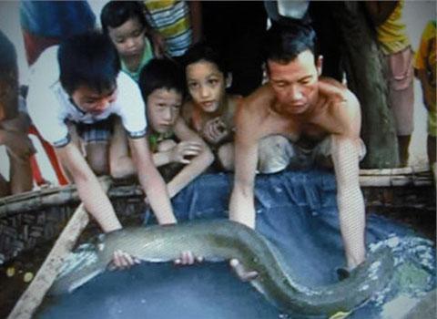 Gia đình ở Nghi Xuân, Hà Tĩnh bắt được con cá chạch dài 1,6m, nặng 10kg vào tháng 9 năm ngoái. Nhiều người tới trả 5 triệu đồng nhưng gia đình không bán. Con chạch khổng lồ đã thu hút rất nhiều người dân xung quanh đến xem.