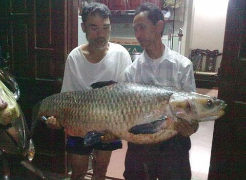 Con cá trắm đen nặng 56kg được người dân câu ngày 18/5/2011 tại hồ Min, thôn Phương Trạch, xã Vĩnh Ngọc, Đông Anh, Hà Nội. Đây là cá trắm có trọng lượng kỷ lục bị bắt tại Hà Nội. Phải hai người mới có thể nhấc lên được. Con cá trăm đen dài 1,3m, vòng bụng 85cm, đuôi rộng 42cm mỗi chiếc vẩy dài 7cm.