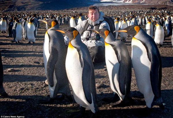 Bầy cánh cụt trên đảo hoang không băng tuyết