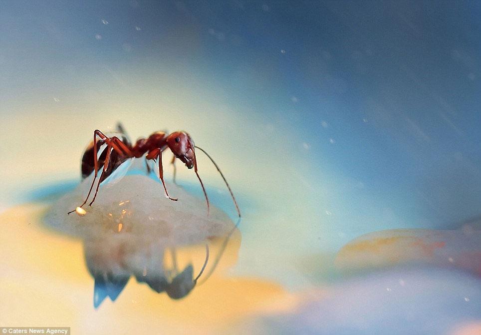 Ảnh đẹp: Lạc vào thế giới côn trùng