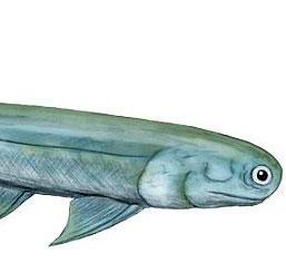 Phát hiện mới: Tổ tiên của con người là cá mập