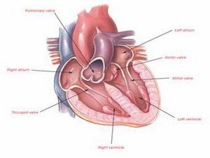 Bước đi đột phá trong kỹ thuật cấy ghép tĩnh mạch