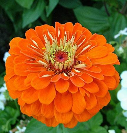 Hoa khiến cảm xúc con người thăng hoa