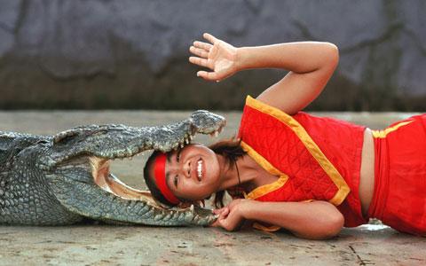 Cô gái chui đầu vào miệng cá sấu trong màn trình diễn trong vườn thú Sriracha, thành phố Sriracha, Thái Lan.