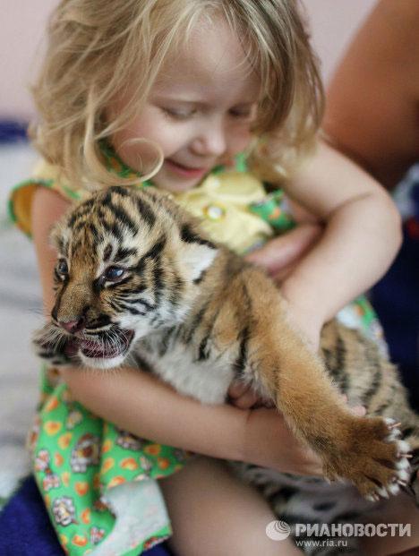 Người không muốn chia tay với hai chú hổ và cũng được hai chú rất quyến luyến là cô chủ nhỏ của Cleopatre, đã cùng chó mẹ nuôi nấng hai hổ con.