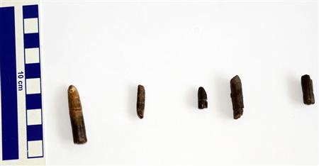5 chiếc răng hóa thạch có kích thước từ 2-4cm