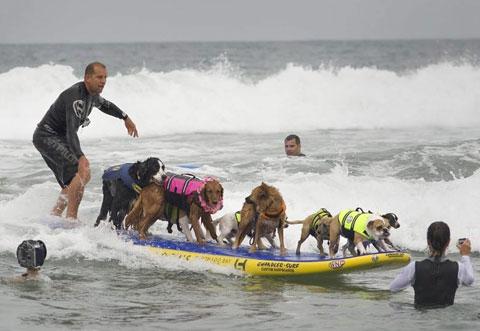 Những con chó tham gia một cuộc thi lướt ván dành cho chó tại Imperial Beach, bang California, Mỹ.