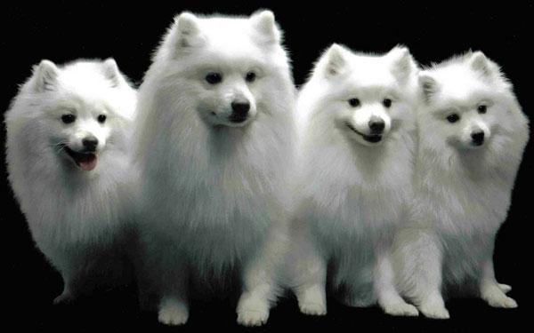 Lập ngân hàng ADN của chó