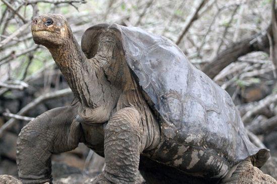 Chú rùa nổi tiếng nhất thế giới đã qua đời