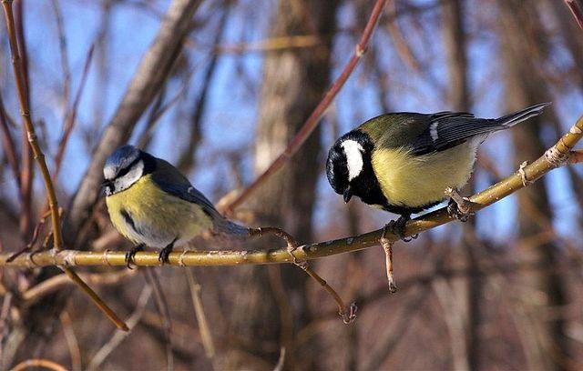 Chim bị ruồng bỏ khi nhan sắc tàn phai
