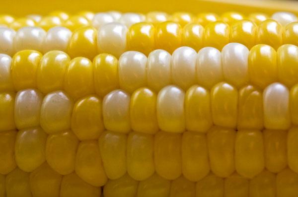 Từng có nhiều vụ kiện chống lại cây trồng biến đổi gene của Monsanto vì cho rằng chúng không an toàn đối với con người và môi trường.