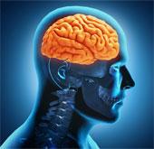 Tiêm tế bào mầm vào não để chữa liệt do đột quỵ