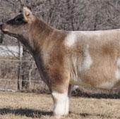 """Video: Loài """"bò lông"""" mới xuất hiện tại Mỹ"""