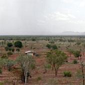 Các khu vực khô cằn trên trái đất xanh tươi hơn nhờ nồng độ CO2 gia tăng