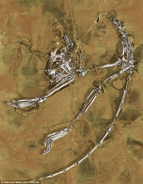 Phát hiện tổ tiên sớm nhất của loài người