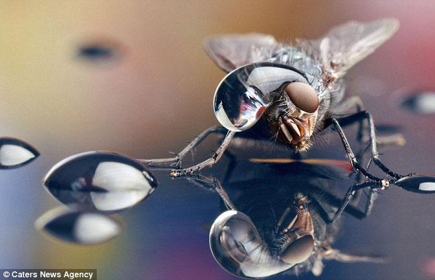 Chùm ảnh côn trùng độc, lạ hiếm thấy