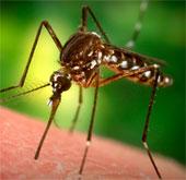 Phát hiện quan trọng mở đường cho thuốc trị sốt rét