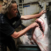 Ngư dân Mỹ bắt được cá mập 600kg
