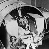 """Những chú chó """"huyền thoại"""" trong lịch sử thế giới"""