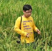 Kỷ lục bất ngờ của bông lúa nghìn hạt
