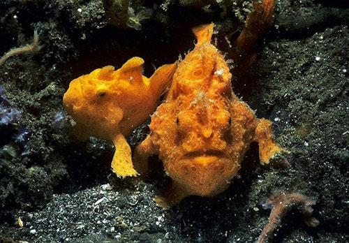 Những thủy quái kỳ dị dưới lòng biển sâu
