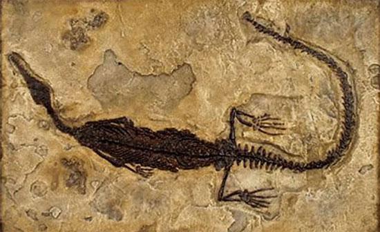 Tìm hiểu về sự hình thành hoá thạch trong tự nhiên (1)
