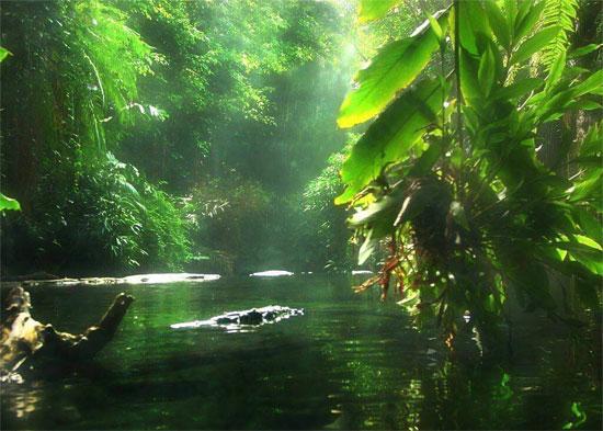 Nhiều loài động thực vật có nguy cơ bị tuyệt chủng