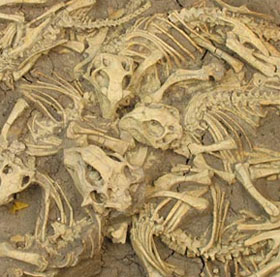 Tìm hiểu về sự hình thành hoá thạch trong tự nhiên (2)