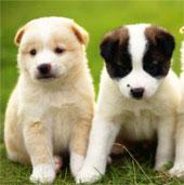 Liên minh bảo vệ chó châu Á được thành lập