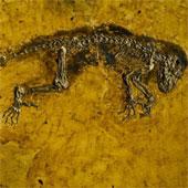 Tìm thấy dấu tích động vật có xương sống cổ đại