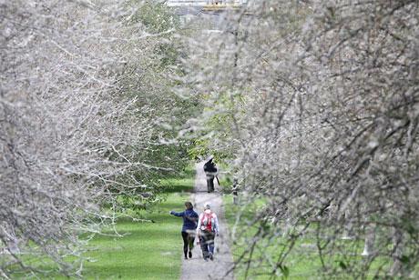 """Hàng """"cây ma"""" tại Anh"""