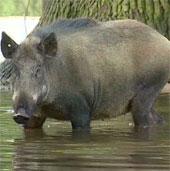 Video: Động vật sở thú châu Âu ngơ ngác vì lụt