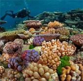 Australia triển khai hệ thống bảo vệ các rạn san hô